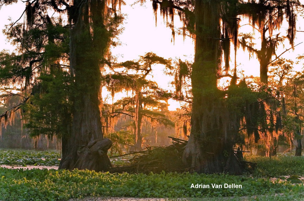 Caddo Lake State Park on